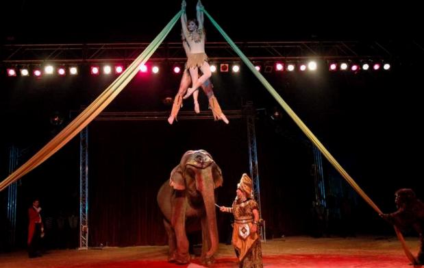 Entradas VIP para El Gran Circo Americano