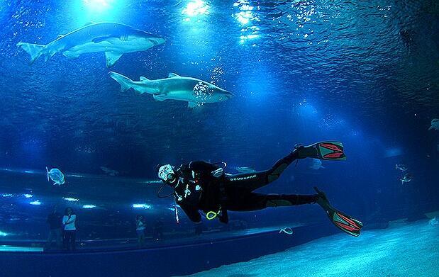 ¡Atrévete a bucear con tiburones!