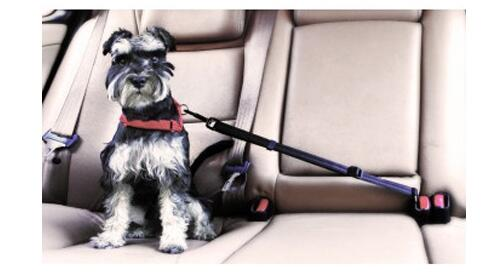 Cinturón de seguridad universal para mascotas