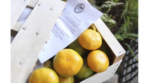Caja 10 Kg de mandarinas selección 17,50€ + Caquis de Regalo